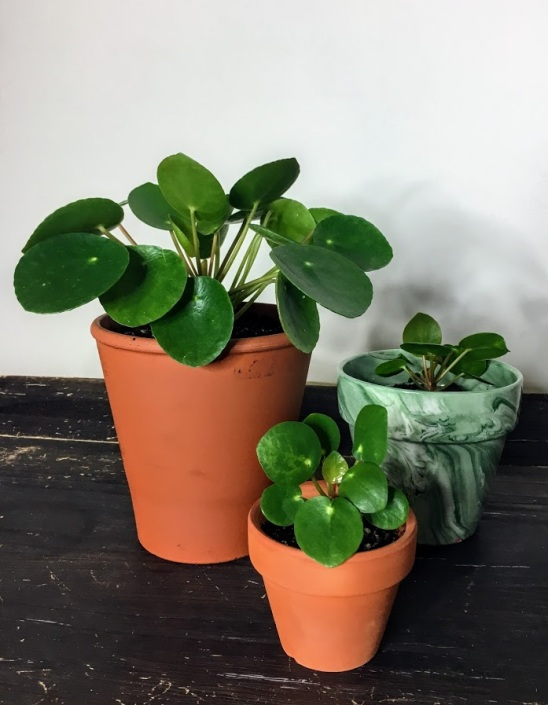 Houseplant journal – Lo Rae Grows